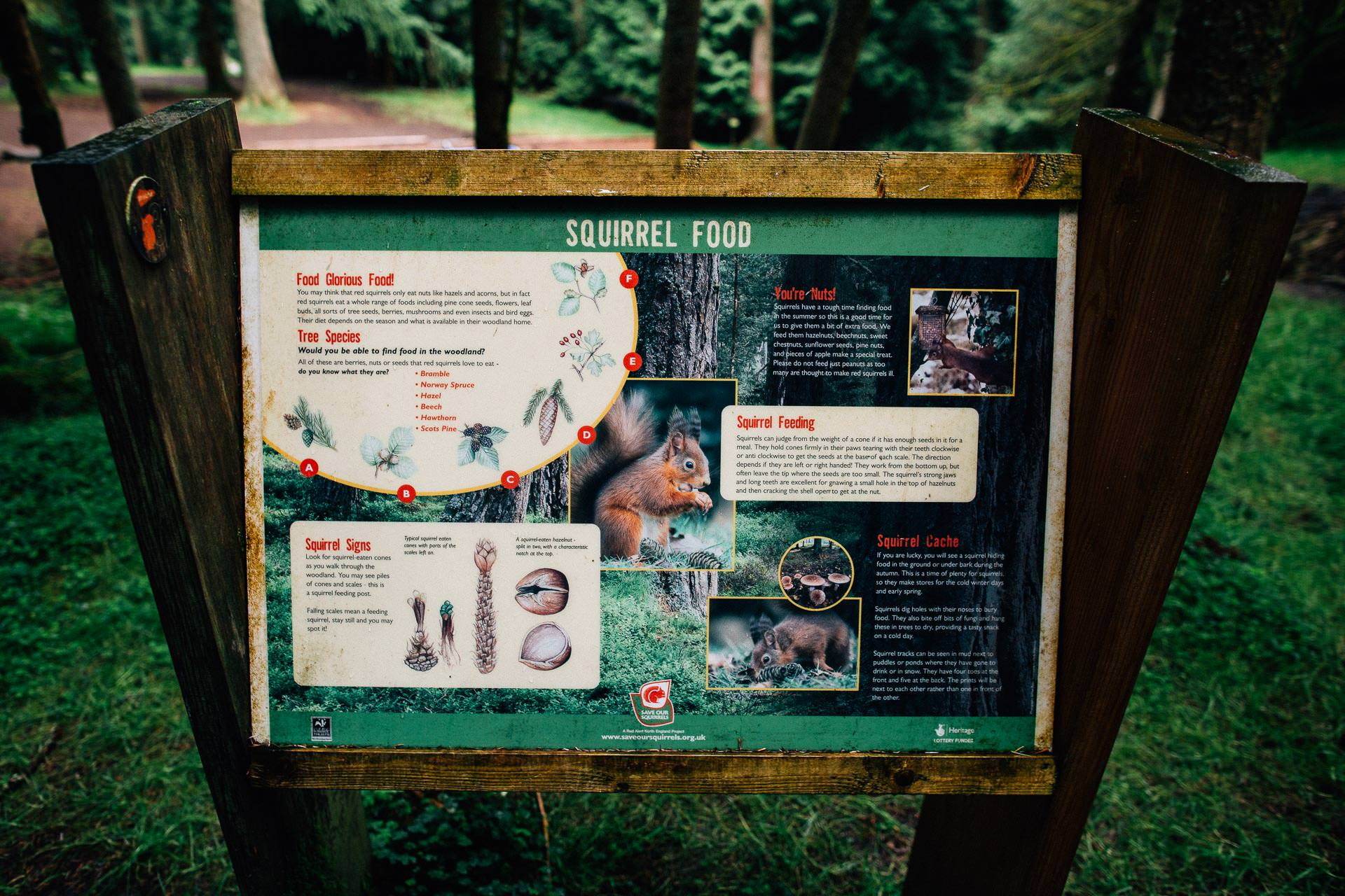 Whinlatter Pre Wedding Shoot Lake District - N&P - sign showing squirrel food in the woods